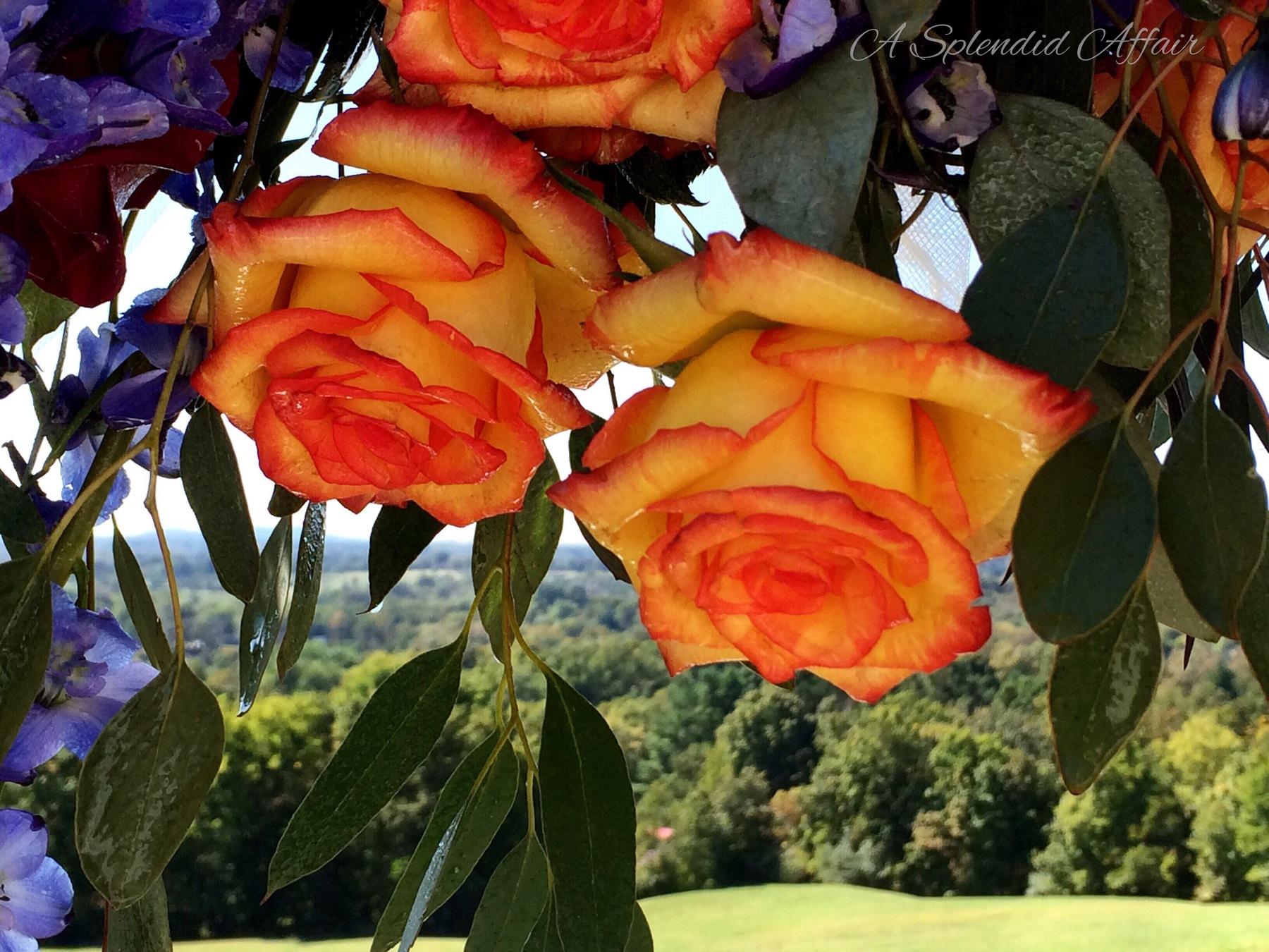 autumn_wedding__a_splendid_affair_carterville_il.jpg