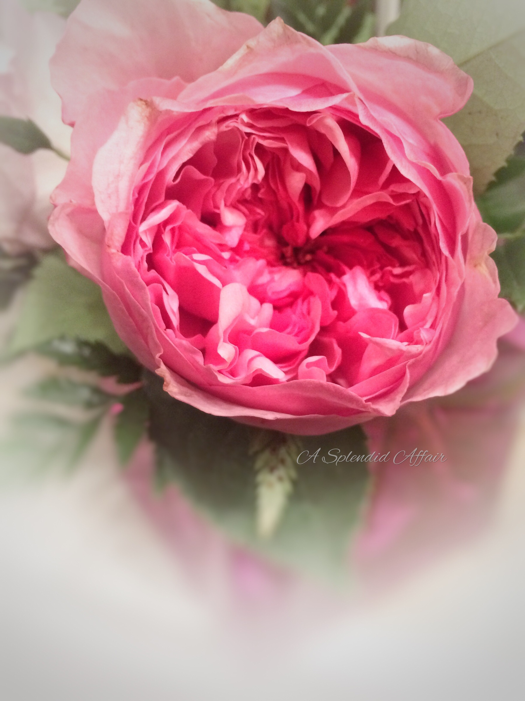 wedding_planner_florist_southern_illinois_garden_roses.jpg